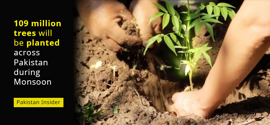 109 million trees will be planted across Pakistan during Monsoon